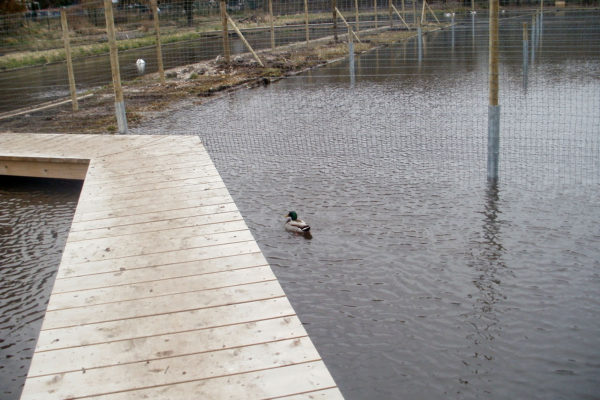 Deer netting fence in water with decking 4